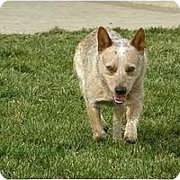 Adopt A Pet :: Tanner - Meridian, ID