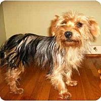 Adopt A Pet :: Heidi - Mooy, AL