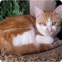 Adopt A Pet :: Castiel - Dallas, TX