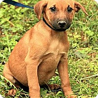 Adopt A Pet :: Patty ($50.00 off) - Brattleboro, VT
