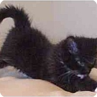 Adopt A Pet :: BeeGee - Davis, CA