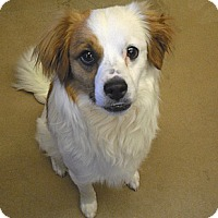 Adopt A Pet :: Tucker - Wickenburg, AZ