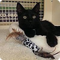 Adopt A Pet :: Coal - Stafford, VA
