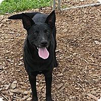 Adopt A Pet :: Sierra - Russellville, KY