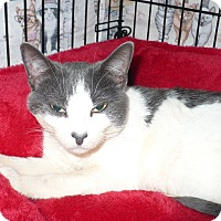 Adopt A Pet :: Sweets - Colmar, PA