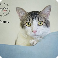 Adopt A Pet :: Johnny - Phoenix, AZ