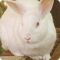 Adopt A Pet :: Huck - Santa Barbara, CA