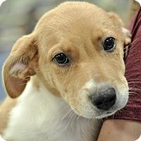 Adopt A Pet :: Banana - Gainesville, FL