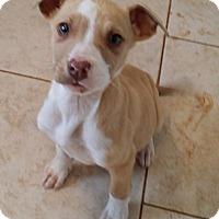 Adopt A Pet :: Hope - Norcross, GA