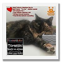 Adopt A Pet :: Tortellini - Palm Desert, CA