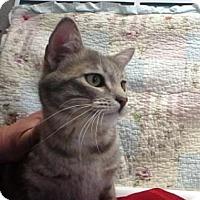 Adopt A Pet :: Monkey #152369 - Apple Valley, CA