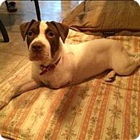 Adopt A Pet :: Karma - Topeka, KS