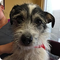 Adopt A Pet :: Oakley - North Bend, WA