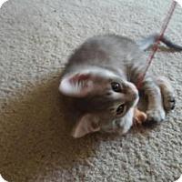 Adopt A Pet :: Toadstool-13285 - Richardson, TX