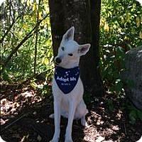 Adopt A Pet :: Alue - Maple Ridge, BC