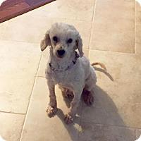 Adopt A Pet :: Baguette - Houston, TX