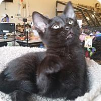 Adopt A Pet :: Rue - Garland, TX