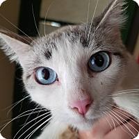 Adopt A Pet :: Patty - Phoenix, AZ