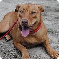 Adopt A Pet :: Lucy - Berkeley Heights, NJ