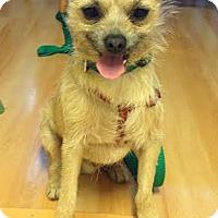 Adopt A Pet :: Minion - Palo Alto, CA