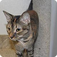 Adopt A Pet :: City - Greensboro, NC