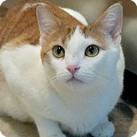 Adopt A Pet :: Gorgeous Gilly! 1 year old beauty - Brooklyn, NY