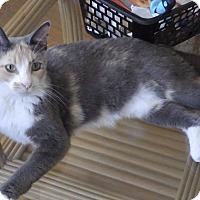 Adopt A Pet :: Gaia - Quail Valley, CA