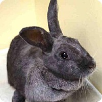 Other/Unknown Mix for adoption in Brooklyn, New York - SCARLETOHARE