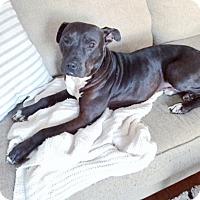Adopt A Pet :: DYLAN - Schaumburg, IL