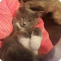 Adopt A Pet :: Nicholas - Jasper, TN