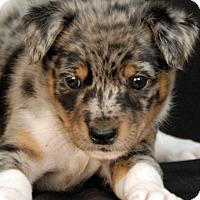 Karma Dog Rescue Mi