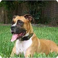 Adopt A Pet :: Murphy - Brunswick, GA