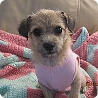 Adopt A Pet :: Kitt - Culver City, CA