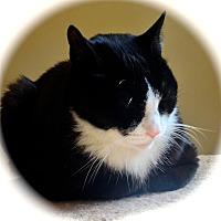 Adopt A Pet :: Lucky - Browns Mills, NJ
