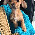 Adopt A Pet :: Slater