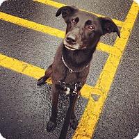 Adopt A Pet :: Bella - Cumming, GA