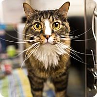 Adopt A Pet :: Waylon - Keller, TX