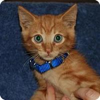 Adopt A Pet :: Frankie Jr. - La Jolla, CA