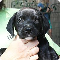 Adopt A Pet :: Rocky - Marion, AR