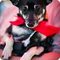 Adopt A Pet :: Fast Eddie has Wheels! - Los Angeles, CA