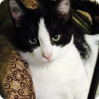 Adopt A Pet :: Elliot - Chattanooga, TN