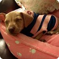 Adopt A Pet :: Zoey - Joliet, IL