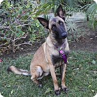 Adopt A Pet :: LULU - Newport Beach, CA