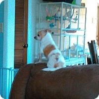 Adopt A Pet :: little buddy - Martinez, GA