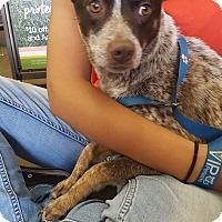 Adopt A Pet :: Chanel - Fresno, CA