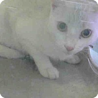 Adopt A Pet :: URGENT on 5/4 at DEVORE - San Bernardino, CA
