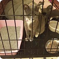 Adopt A Pet :: Elsa - Homestead, FL