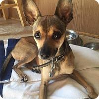 Adopt A Pet :: Dyson - Tomah, WI