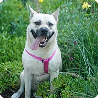 Adopt A Pet :: Isabelle - Loomis, CA