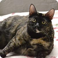 Adopt A Pet :: Sansa - Brooklyn, NY